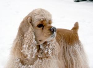 Sawyer 2008 snow